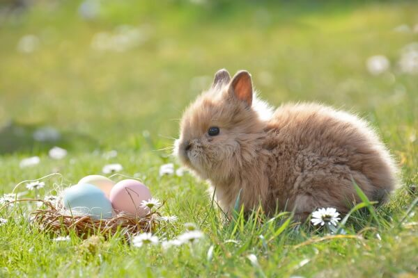 Hase mit Ostereiern